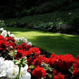 Lawn Borders - Harveys Grounds Maintenance Cannock, Staffordshire